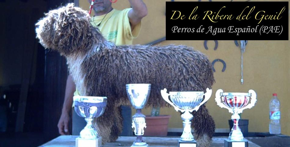 Perros de agua de la Ribera del Genil